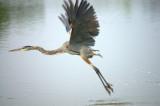 A Bird in the Lens II
