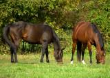Horses - Mill Creek Organic Farm N.J.