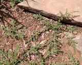 Weeds (200's)