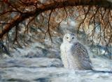 Beauté sur neige - Huile 18 X 24 - Collection privée