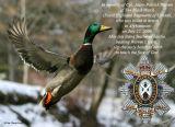 In Memoriam - Cpl. Jason Patrick Warren - Black Watch of Canada