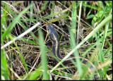 snake01_8382.jpg