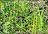 snake02_8385.jpg