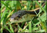 snake03_8389.jpg