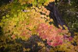 New England Color