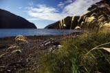 Neck Cove - Toi Toi