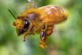 Bee Flight  1