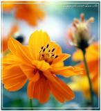 Flower's & Plants