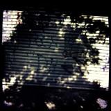 Shadow 11