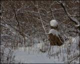 2724 Snowfall at Thickson's.jpg