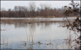 0650 Pond.jpg