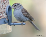 2541 Chipping Sparrow.jpg