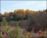 3114 Fall colours.jpg