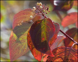 3119 Fall Colours.jpg