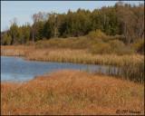 3132 Pond.jpg