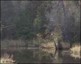 3134 Jackson Creek.jpg