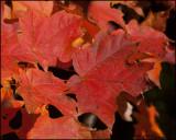 3146 Fall Colours.jpg