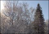 0761 Sun and Snow.jpg
