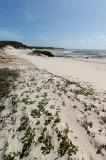 Dunes, plants, and ocean (DSC3880)