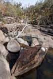 Tree and rocks (DSC_1039)