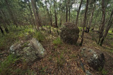 Granite boulders in  Casuarina  forest  IMG_1001