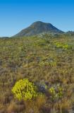 Mountain and fynbos _DSC0265