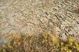 Salt marsh, low tide_DSC5178
