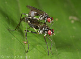 killerbugs.jpg