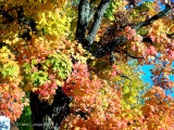 Autumn's Potpourri!
