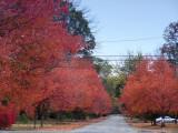 Lane in Louisville, Kentucky.