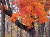 Autumn's Glory!