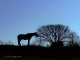 Horses on a Hill.