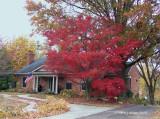 Autumn Red.