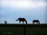 Kentucky Horse Farm.