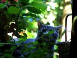Bird-Watcher!