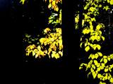 Autumn Tease!