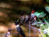 A Faithful Hummingbird
