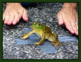Biggest-Littlest-Longest Jumping Frog Contest