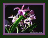 December Orchids.