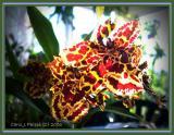 003 Orchid Gallery.JPG