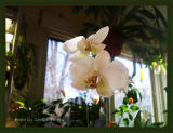 012 Orchid Gallery.JPG