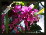 018 Orchid Gallery.JPG