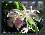 028 Orchid Gallery.JPG