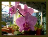 033 Orchid Gallery Jewel.JPG