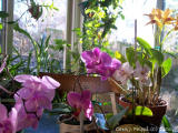 An Orchid Convention.