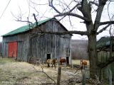 This Ol' Farm.