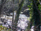 West Virginia White-water.