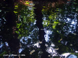 Reflections in Maryland (USA) Lagoon.JPG