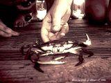 This Liltle Crab.