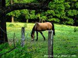 West Virginia Horse Farm.